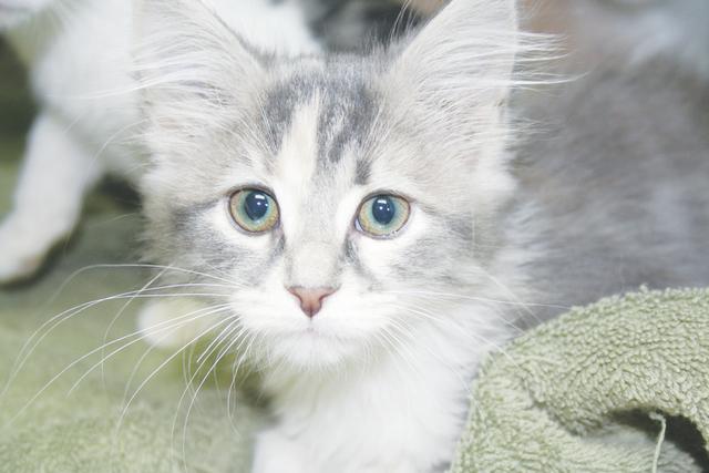 web1_Cat.jpg