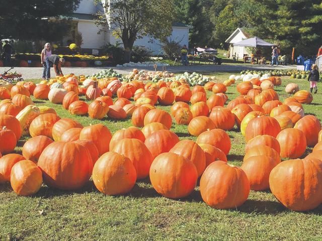 web1_Pumpkin2.JPG