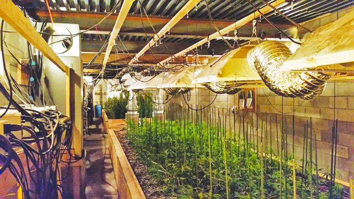 Adams County Sheriff Kimmy Rogers provided this photo of the extensive marijuana grow operation found on Mayhill Road.  Photo courtesy of Adams County Sheriff's Office