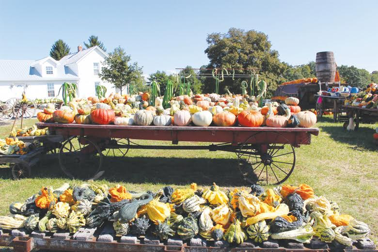 Pumpkins and gourds of all sizes are just one of the many attractions coming to this weekend's Wheat Ridge Olde Thyme Herb Fair and Harvest Festival.